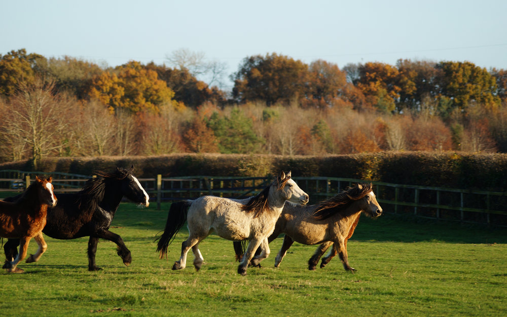 Pippin, Kanzi, Brina & Gala recovered at Redwings