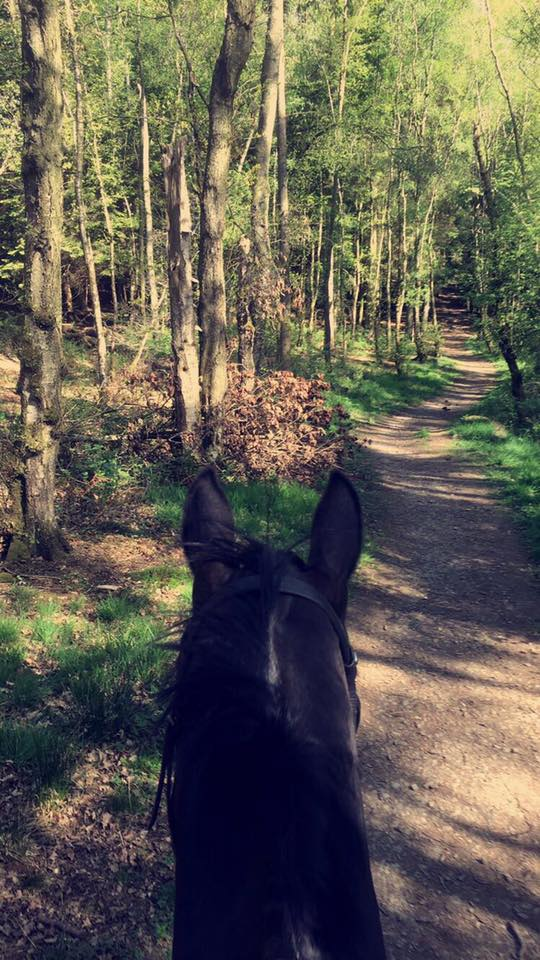 Deborah Law and her horse hacked four miles in Scotland on a beautiful sunny day
