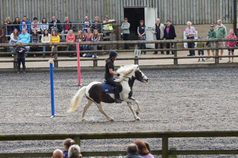 Rehoming demonstration with Redwings Zig Zag (PIC: Redwings)