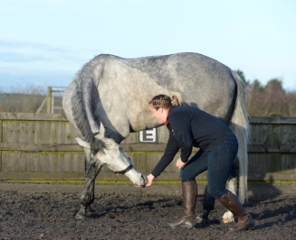 Learn how stretches can help to keep your horse happy and healthy