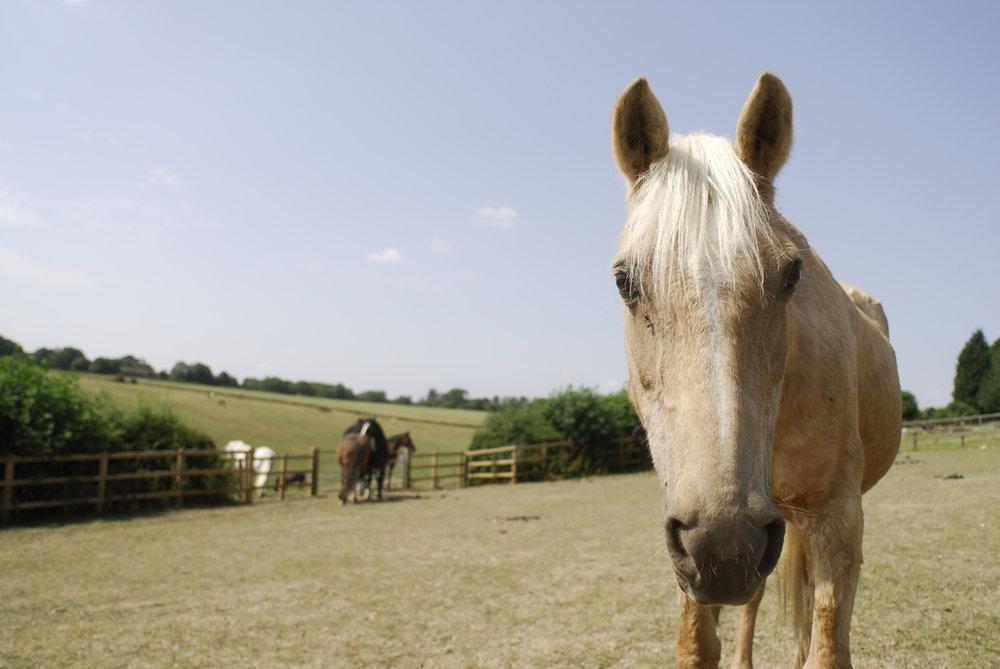old horse.jpg