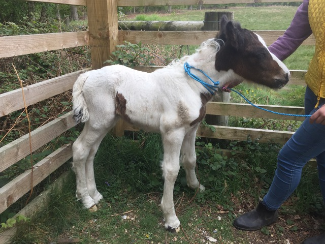 This little foal was dumped and left to fend for himself