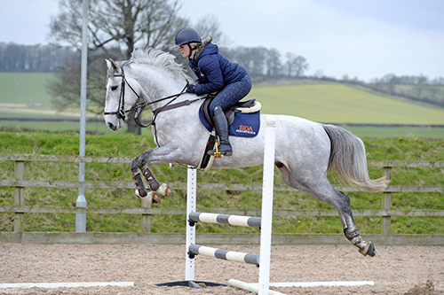 Build a strong horse - with our training programme