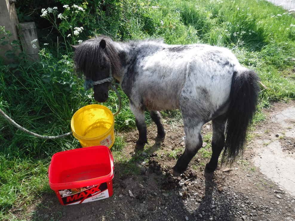 The mare was found in a very poor state (Pic: RSPCA)