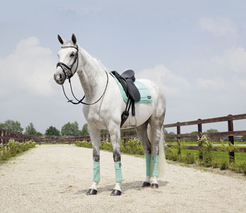 Anky saddle pad and bandages