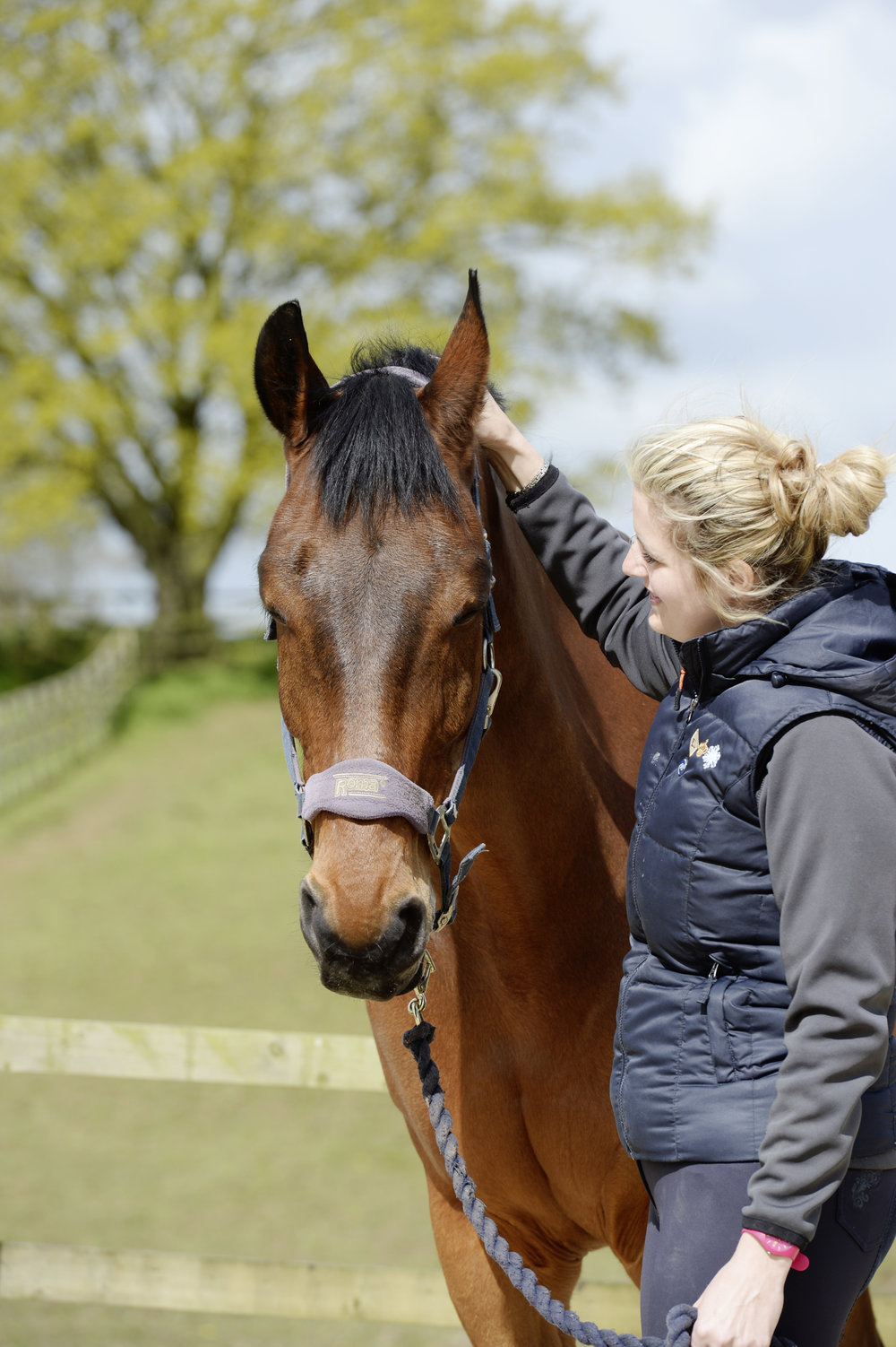 How to Keep a Horse Calm While Riding forecast