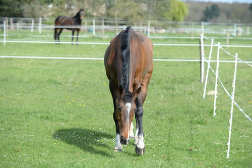 Reduce the risk - How to limit laminitis