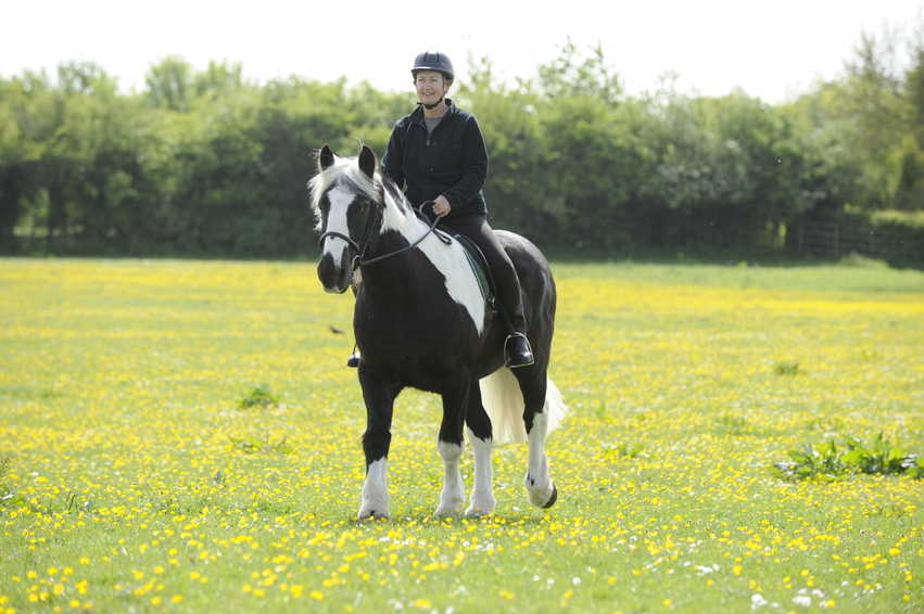 Riding in the sun can be appealing, but make sure your horse doesn't get too hot