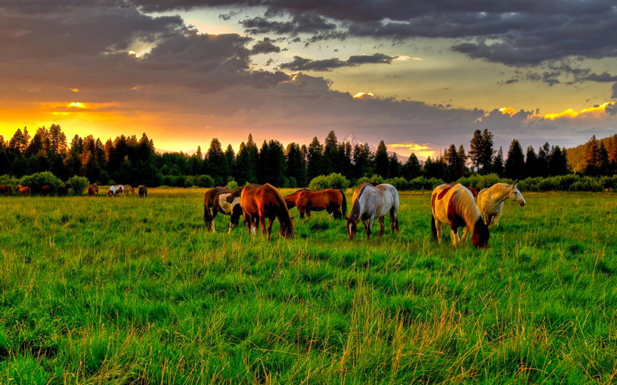 Horses are naturally sociable animals, with both wild and domesticated horses forming herds with a rigid social structure.