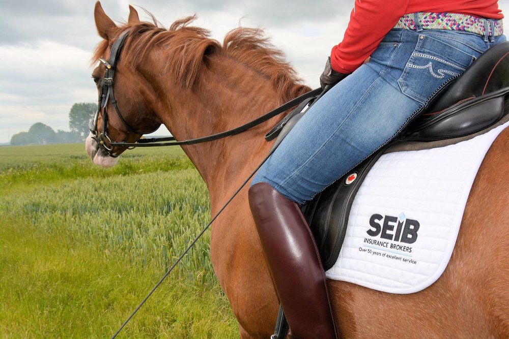 Bert believes that hacking helps to give her horses confidence out in the big, wide world