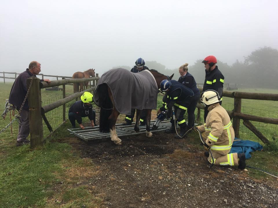 horse-stuck-in-gate