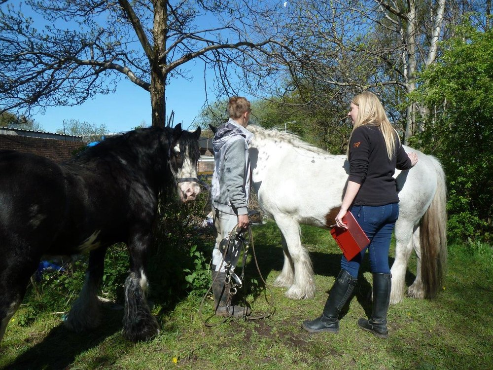 Members of the Zoetis UK equine team joined volunteers to attend special clinics around the UK