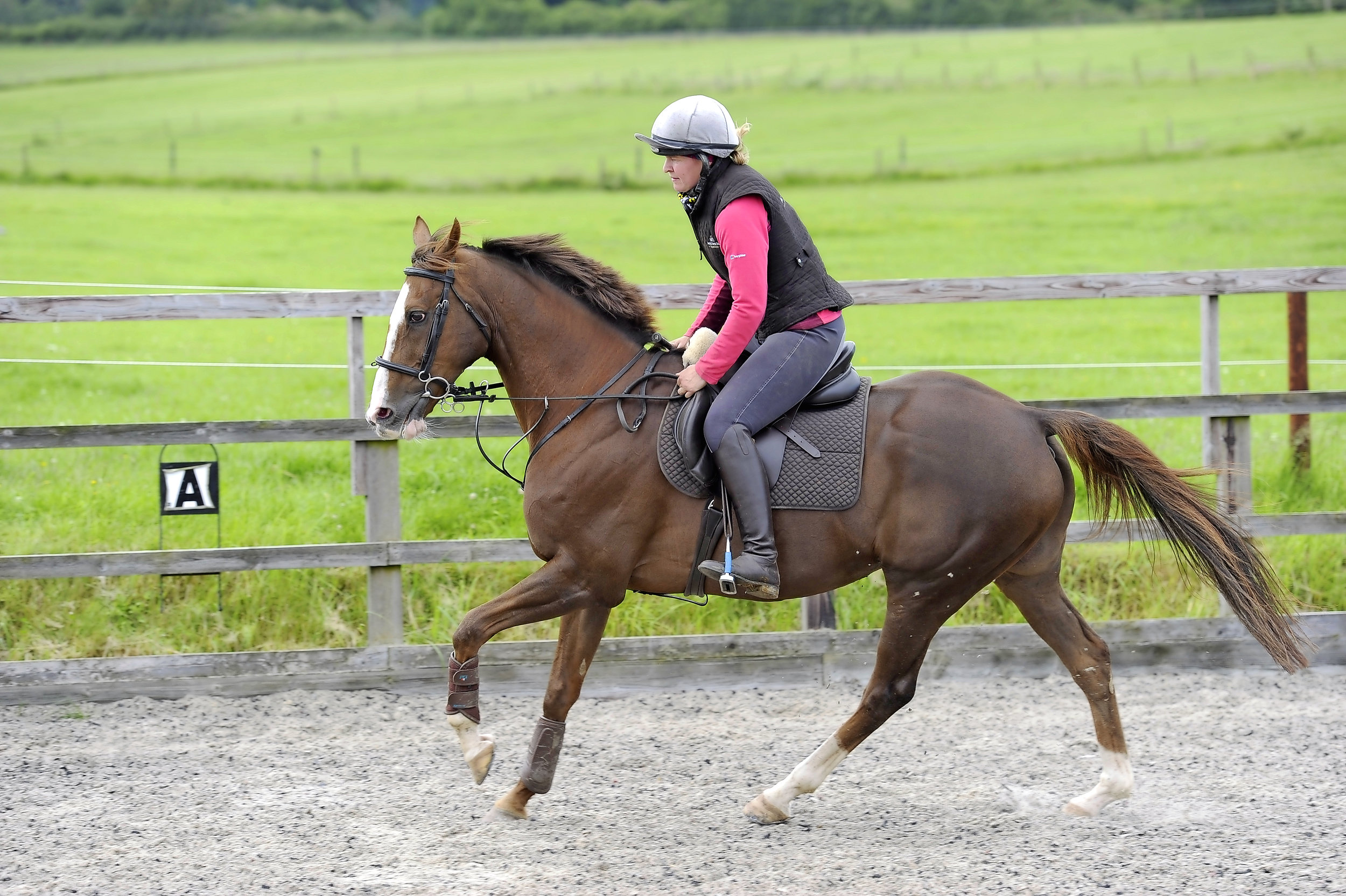 Establishing Balance And Improving An Ex Racehorse S Canter Your Horse Magazine
