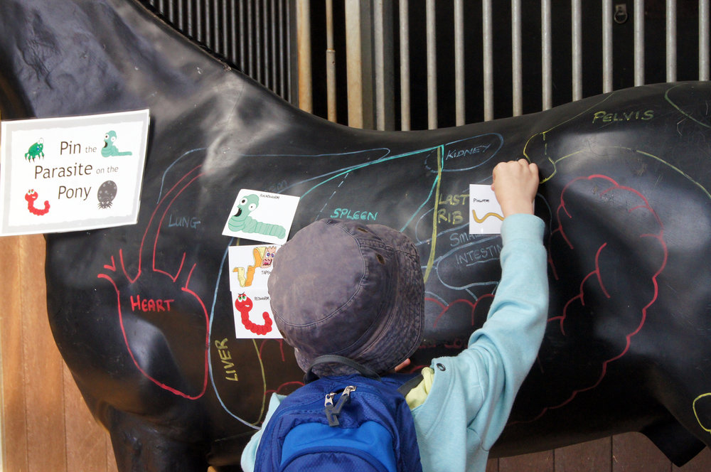 A game of 'pin the parasite' on the (plastic) horse!