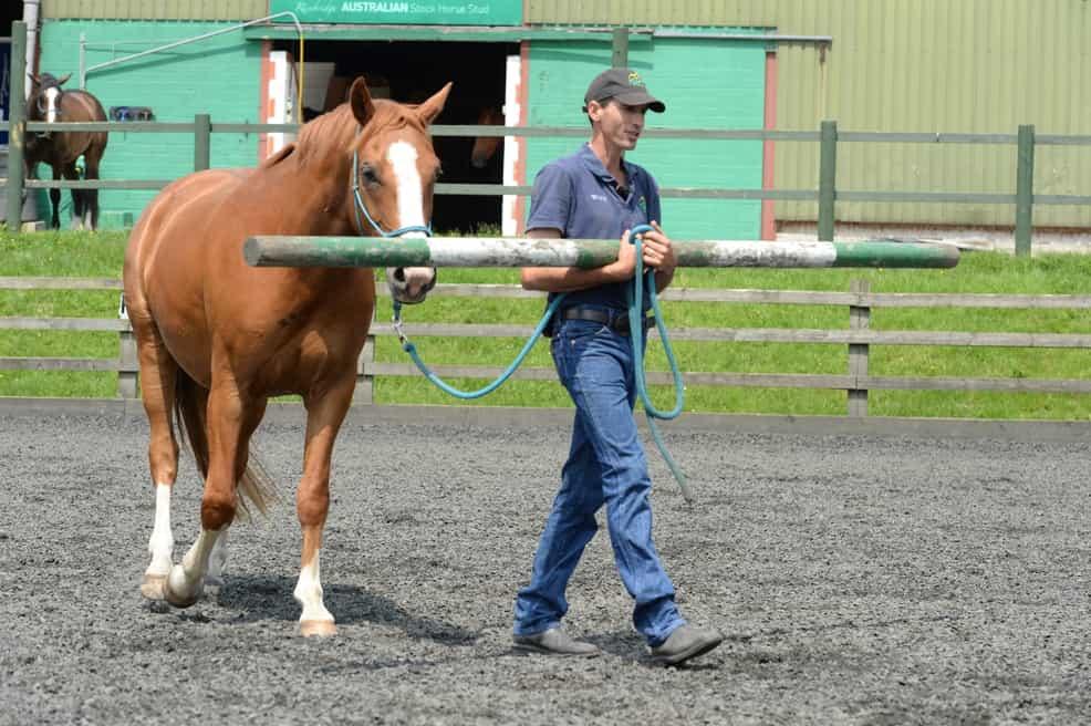 leading-a-horse-mason-webb