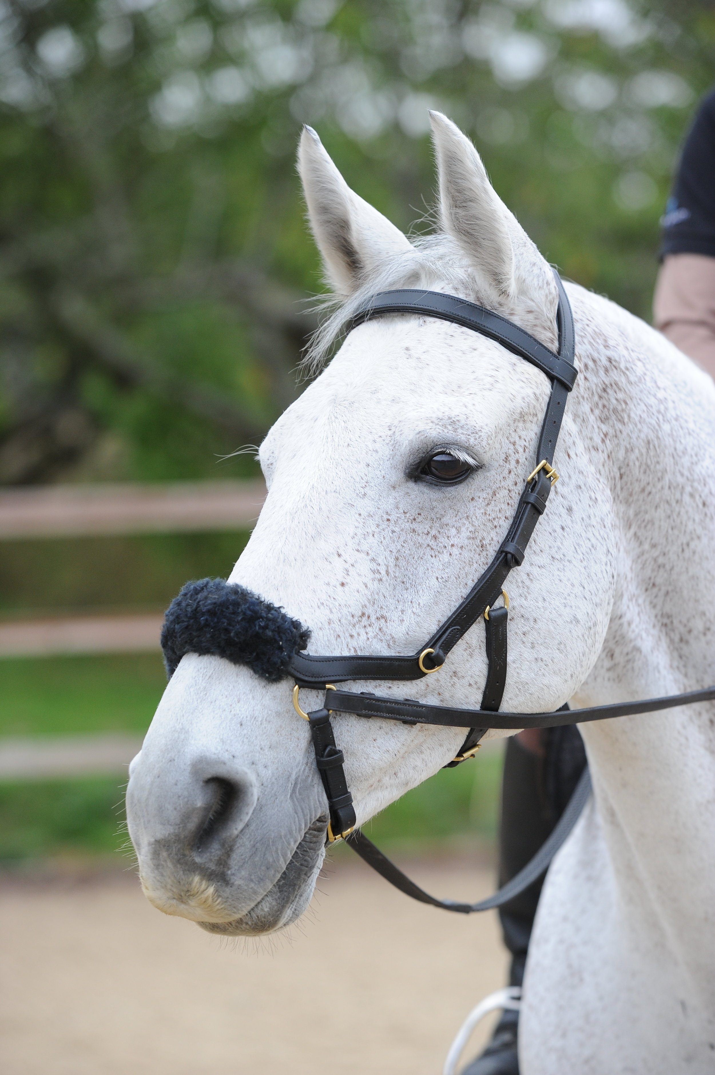 how to put on a bitless bridle