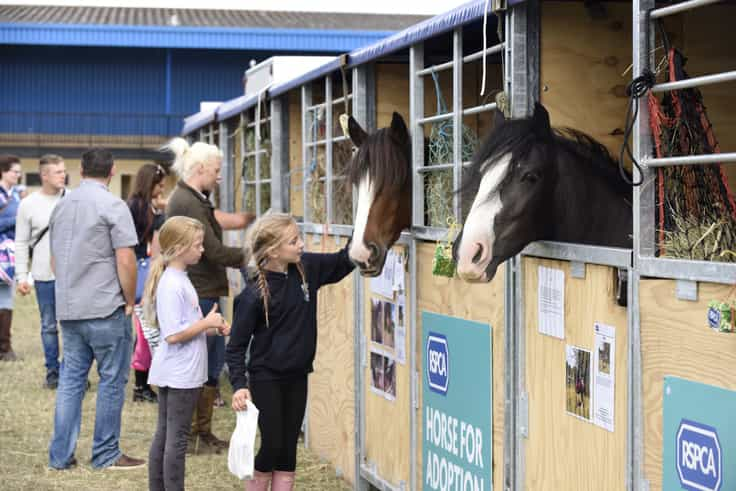 Rescue horses are heading to Equifest this weekend