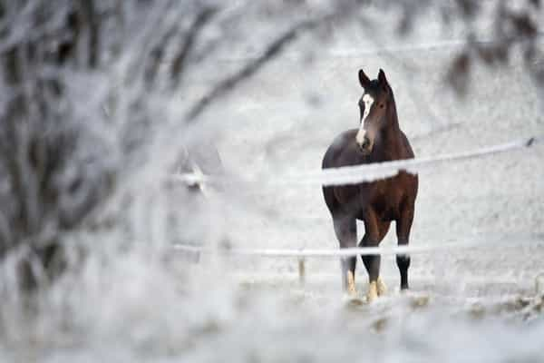 horse-in-field-in-winter