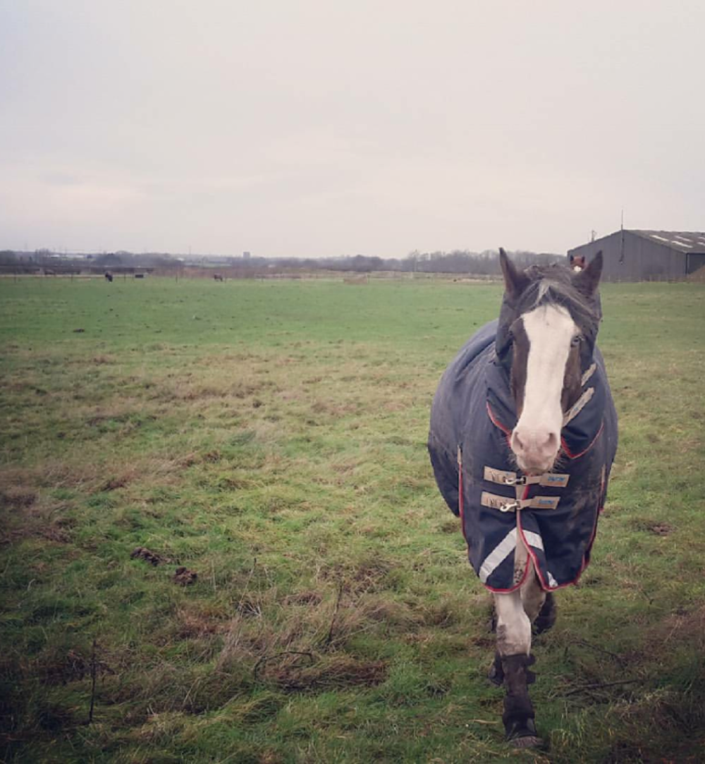 Dillon looking cosy in his Premier Equine turnout rug