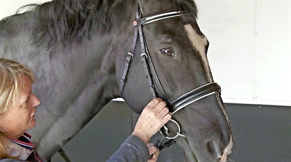 Bridle fit screen shot.jpg
