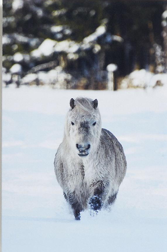 Sweeping through the snow - £3.95 (pack of 10) from World Horse Welfare