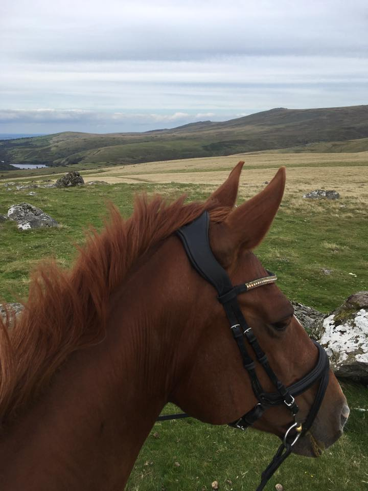 """""""A cheeky four miles today, someone was very chatty to the locals (Dartmoor ponies) but was unamused when one bold foal showed an interes1"""""""