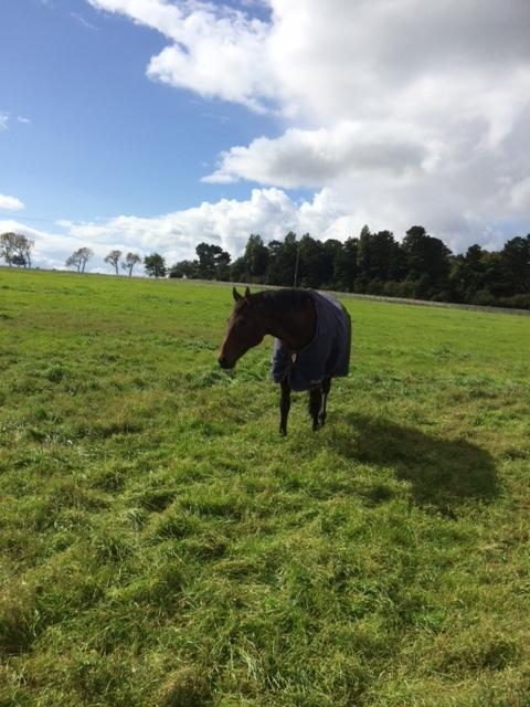 Tobi enjoying the winter grazing