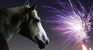 Horses and fireworks - 10 tips from the BHS