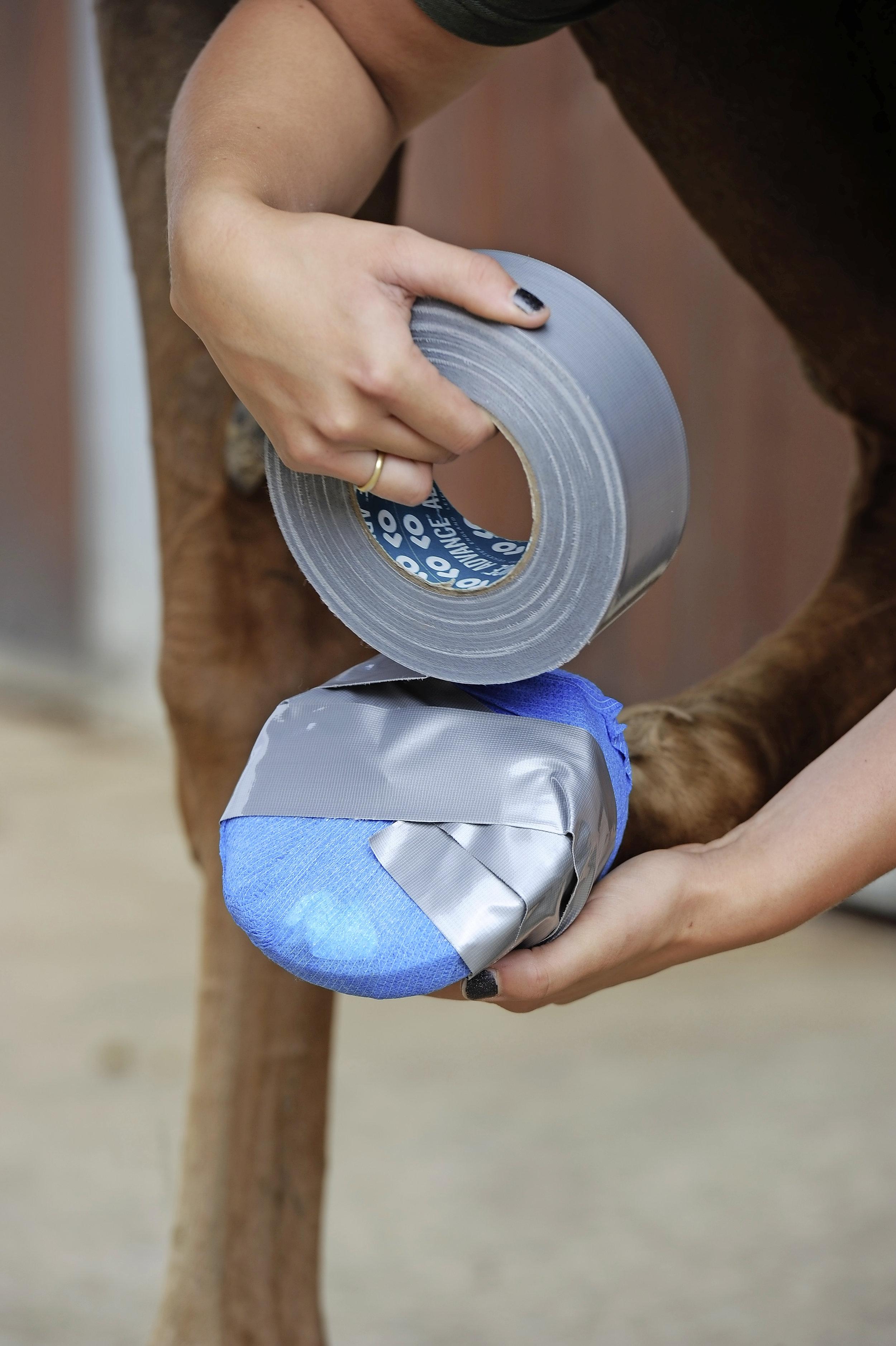 Premium Kit Decron Poultice+Canvas Boots+Bandage Horse Hoof Abscess Infectionful