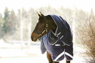Treat your horse to a new Rambo turnout rug this winter
