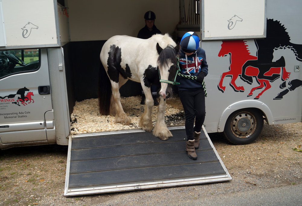 Oakley arriving at his new home (Pic: Redwings)