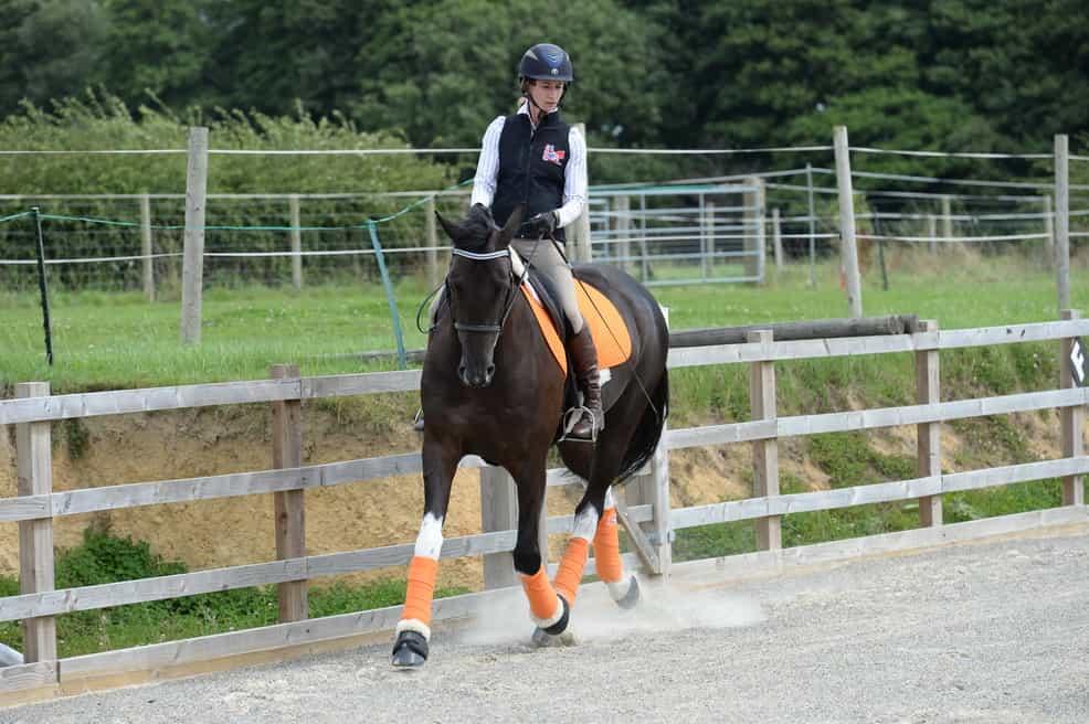 horse-flexion.jpg