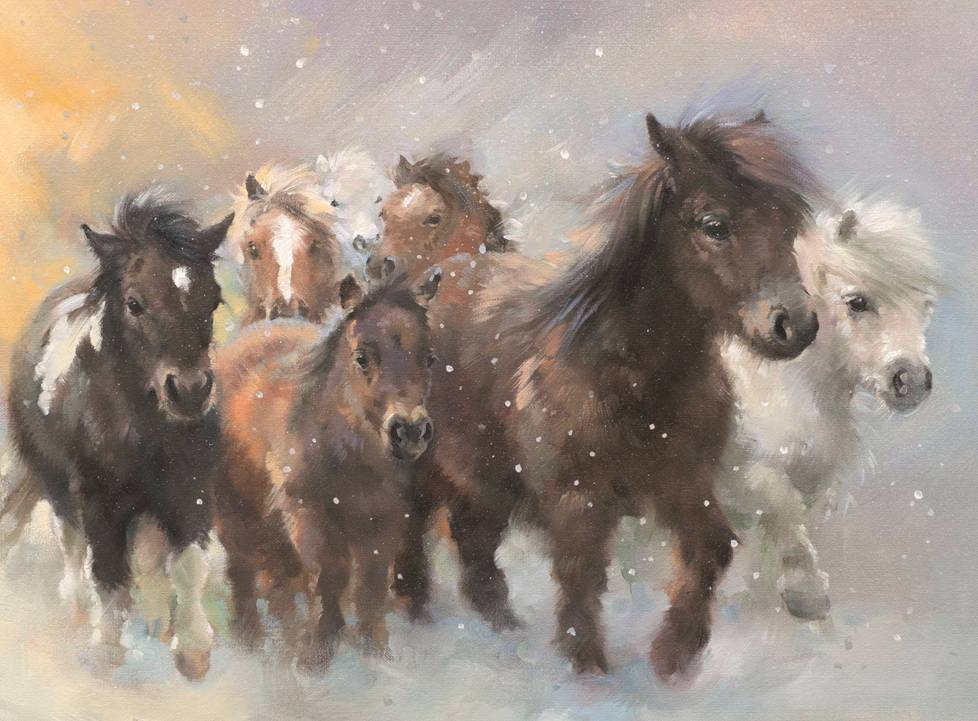 Shetland Flurries  - £6.00 (pack of 10) from Equine Grass Sickness Fund