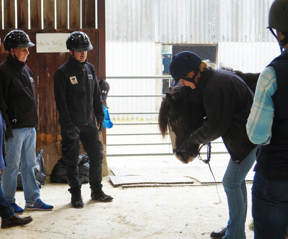 Redwings' Equine Behaviour Manager Sarah Hallsworth demonstrates fitting a headcollar