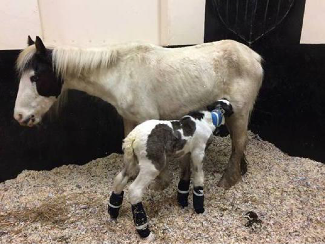 Hope with her foal Puddle just after they were found
