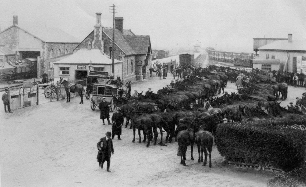 Mules on their way to war in Minehead