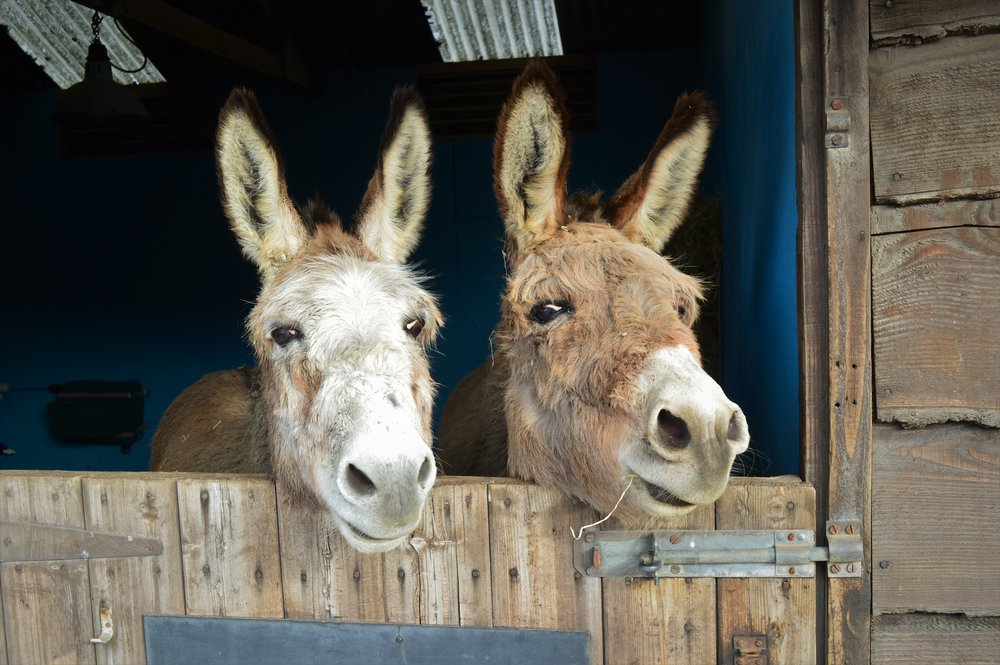 Donkeys' coats don't change in the same way that horses' and ponies' do