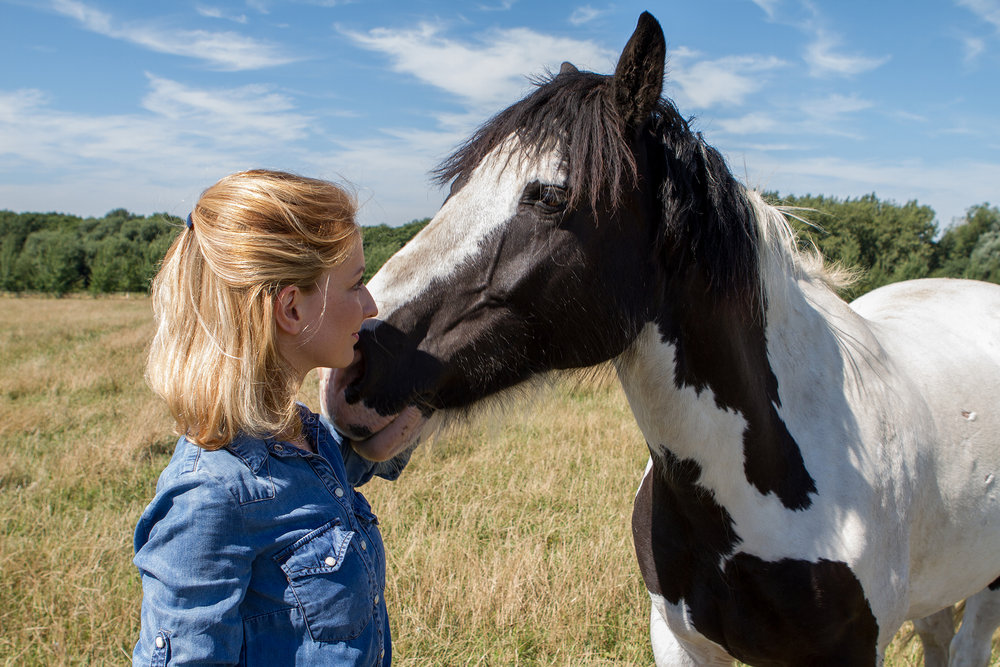 The research also found that end-of-life decisions are not just for older animals, with the number of equids who die aged 7-10 years being similar to those aged 26-30 years. (Pic: World Horse Welfare)