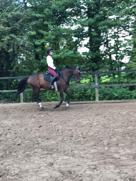 Sadly it seems that this canter is strictly reserved for training only…