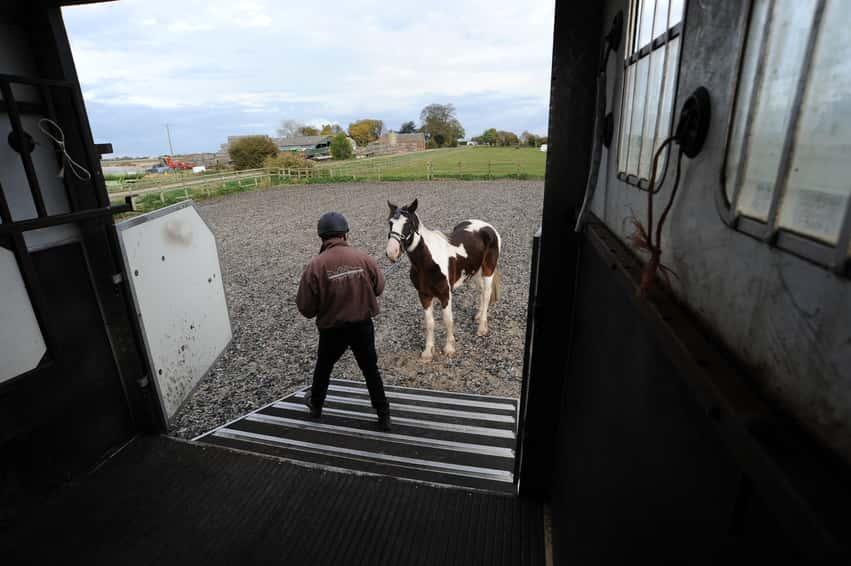 loading-horse-1.jpg