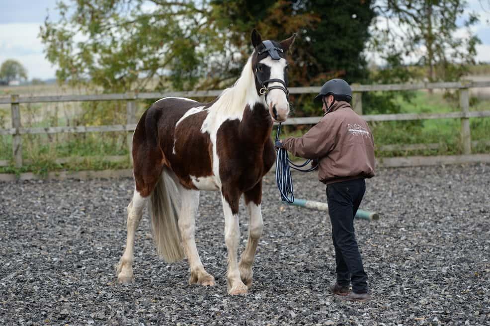horse-backing-up-1.jpg
