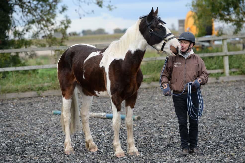 horse-standing-still-1.jpg