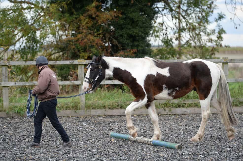 horse-going-over-pole-1.jpg