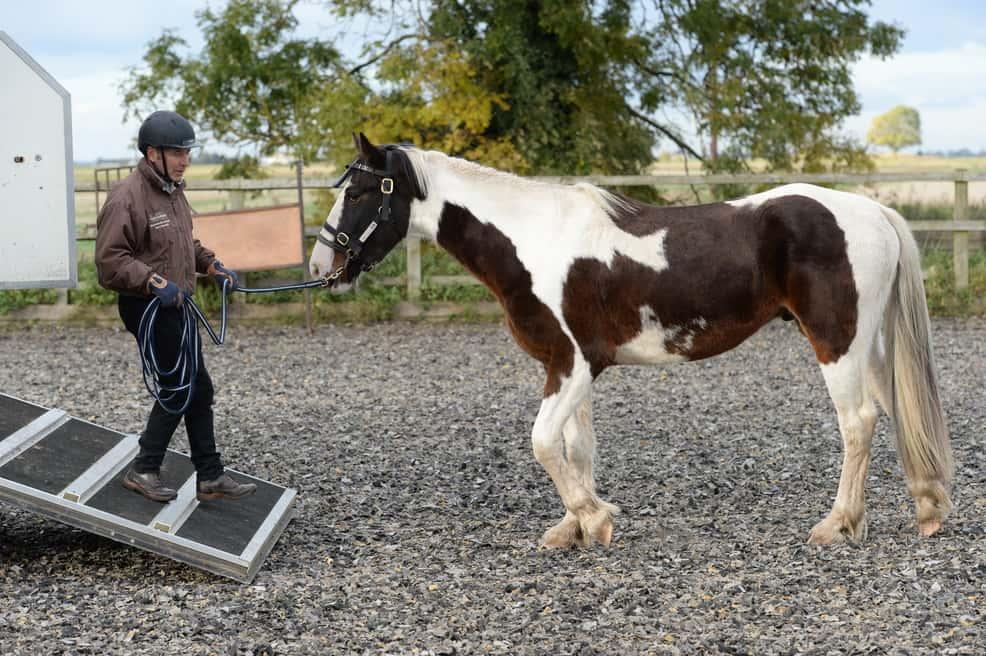 horse-loading-1.jpg