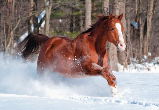 Christmas cards - That help horses