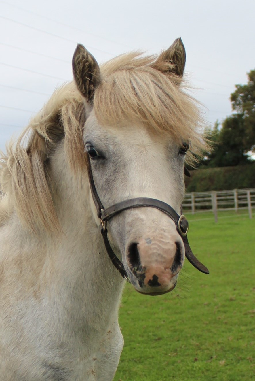 Pearl is now up for rehoming.