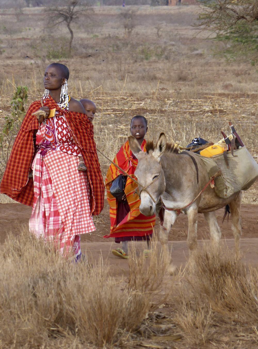 Working donkeys (Pic: The Donkey Sanctuary)