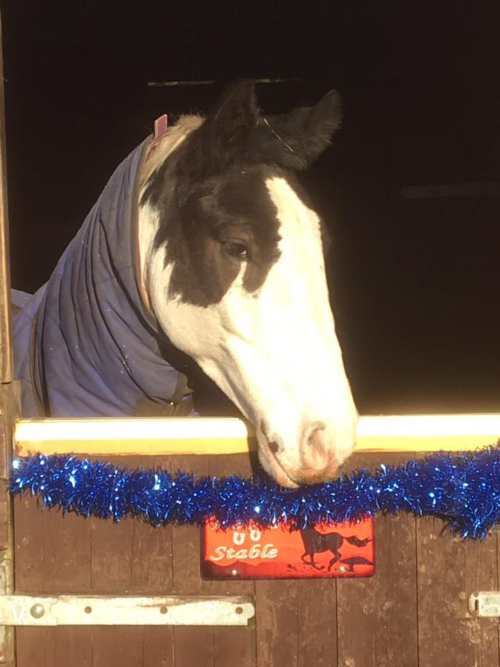 We're loving the decoration on Leo's (owned by Leonie) stable. Very festive!