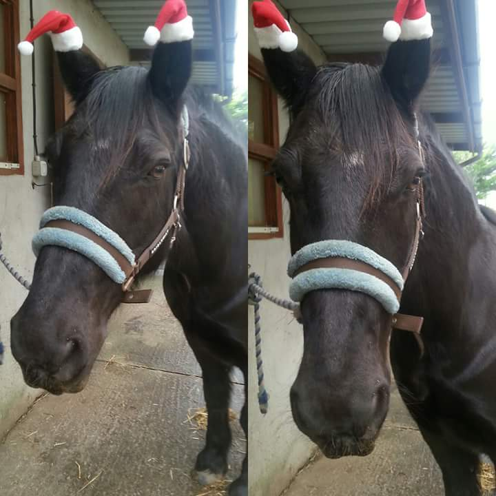 We think Murphy (owned by Emily) looks very cute in his Santa hats