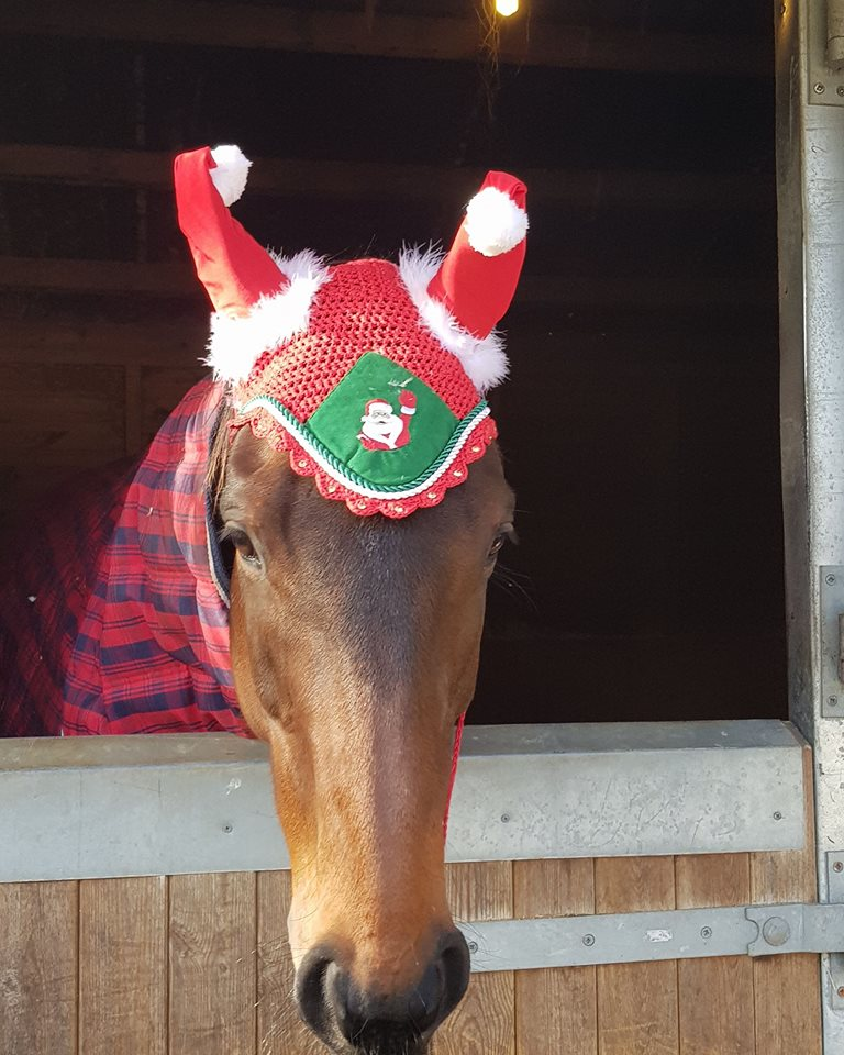 Louise and Doodle Dandy are well prepared for their Christmas Eve hack